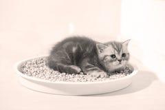 Μικρό γατάκι στα απορρίματά του στοκ φωτογραφίες με δικαίωμα ελεύθερης χρήσης