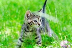 Μικρό γατάκι στη χλόη Στοκ Εικόνες