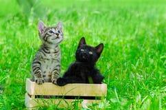 Μικρό γατάκι στη χλόη Στοκ εικόνα με δικαίωμα ελεύθερης χρήσης