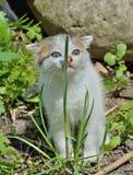 Μικρό γατάκι 1 Στοκ Εικόνες