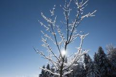 Μικρό δέντρο που καλύπτεται με το χιόνι σε μια χειμερινή ημέρα στοκ φωτογραφίες με δικαίωμα ελεύθερης χρήσης