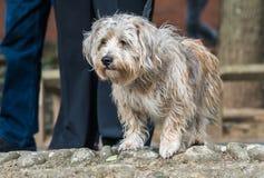 Μικρό δασύτριχο σκυλί Στοκ φωτογραφίες με δικαίωμα ελεύθερης χρήσης