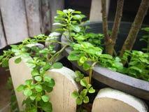 Μικρό δοχείο φυτών φύλλων Στοκ εικόνες με δικαίωμα ελεύθερης χρήσης