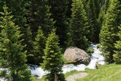 Μικρό ειδυλλιακό ρεύμα βουνών στη μέση ενός δάσους πεύκων στις ελβετικές Άλπεις Στοκ φωτογραφίες με δικαίωμα ελεύθερης χρήσης