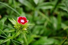 Μικρό ενιαίο λουλούδι διάστημα αντιγράφων Στοκ Φωτογραφία