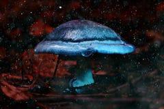 Μικρό δηλητηριώδες μανιτάρι Στοκ Φωτογραφίες