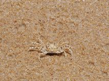 Μικρό διαστιγμένο καβούρι στη χρυσή άμμο Στοκ φωτογραφία με δικαίωμα ελεύθερης χρήσης