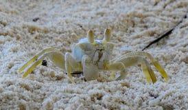 Μικρό καβούρι στην άμμο Στοκ φωτογραφία με δικαίωμα ελεύθερης χρήσης