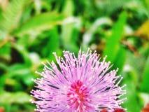 μικρό και όμορφο λουλούδι Στοκ Εικόνα