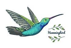 Μικρό κολίβριο Καστανοκοκκινωπό πουλί Εξωτικά τροπικά ζωικά εικονίδια Χρυσός παρακολουθημένος σάπφειρος Χρήση για το γάμο, κόμμα  Στοκ Φωτογραφίες