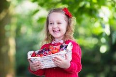Μικρό κορίτσι με τα φρέσκα μούρα σε ένα καλάθι Στοκ Εικόνες
