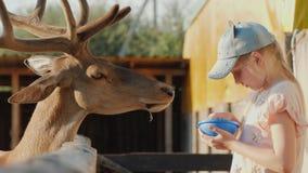 Μικρό κορίτσι που ταΐζει ένα ελάφι κοντά στον ξύλινο φράκτη απόθεμα βίντεο
