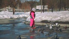 Μικρό κορίτσι που χαράζει τα περιστέρια την πρώιμη άνοιξη απόθεμα βίντεο