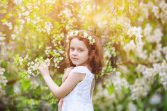 Μικρό κορίτσι στα άσπρα δέντρα κερασιών φορεμάτων ανθίζοντας πλησίον Στοκ φωτογραφία με δικαίωμα ελεύθερης χρήσης