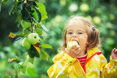 Μικρό κορίτσι στον κήπο μήλων Στοκ φωτογραφία με δικαίωμα ελεύθερης χρήσης