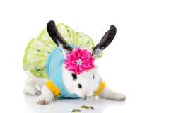 Μικρό κουνέλι σε ένα ΦΟΡΕΜΑ με το λουλούδι Στοκ Φωτογραφία