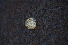 Μικρό κοχύλι σαλιγκαριών που κολλιέται σε έναν τοίχο στοκ φωτογραφίες