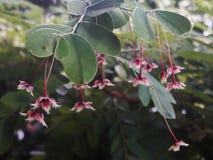 Μικρό λουλούδι Στοκ Φωτογραφία