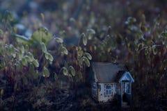 Μικρό μαγικό σπίτι νεράιδων στο βρύο στο δασικό σεληνόφωτο στη νύχτα Μυθικό μαγικό ξέφωτο στην τονισμένη δάσος φωτογραφία παραμυθ Στοκ Εικόνες