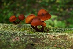 Μικρό μανιτάρι στο δάσος στοκ φωτογραφίες με δικαίωμα ελεύθερης χρήσης