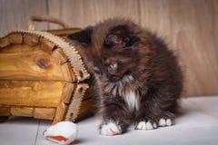 Μικρό μαύρο παιχνίδι παιχνιδιού γατακιών σε ένα ξύλινο υπόβαθρο Στοκ Φωτογραφίες