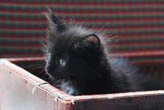 Μικρό μαύρο χνουδωτό γατάκι στην εκλεκτής ποιότητας βαλίτσα Περίεργα κοιτάζοντας έξω Στοκ φωτογραφία με δικαίωμα ελεύθερης χρήσης