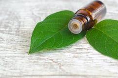 Μικρό μπουκάλι του ουσιαστικού πετρελαίου και των φρέσκων φύλλων στο ξύλινο υπόβαθρο aromatherapy concept spa Στοκ φωτογραφία με δικαίωμα ελεύθερης χρήσης