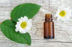 Μικρό μπουκάλι του ουσιαστικού πετρελαίου, των φρέσκων φύλλων και των chamomile λουλουδιών πέρα από το ξύλινο υπόβαθρο Τοπ άποψη, Στοκ φωτογραφία με δικαίωμα ελεύθερης χρήσης