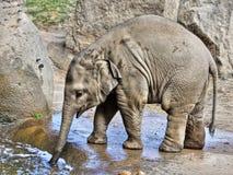 Μικρό μωρό ελεφάντων, άγρια φύση, θηλαστικά Στοκ εικόνα με δικαίωμα ελεύθερης χρήσης