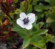 Μικρό λουλούδι Στοκ εικόνα με δικαίωμα ελεύθερης χρήσης