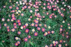 Μικρό λουλούδι Στοκ Φωτογραφίες