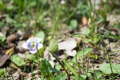Μικρό λουλούδι Στοκ φωτογραφία με δικαίωμα ελεύθερης χρήσης
