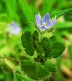 Μικρό λουλούδι Στοκ Εικόνες
