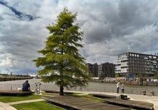 Μικρό πάρκο στο Hafencity στο Αμβούργο στοκ εικόνες με δικαίωμα ελεύθερης χρήσης