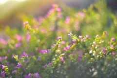 Μικρό πέταλο του λουλουδιού στον κήπο Στοκ Εικόνες