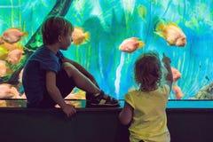 Μικρό παιδί και κορίτσι που προσέχουν τα τροπικά ψάρια κοραλλιών στη μεγάλη δεξαμενή ζωής θάλασσας Παιδιά στο ενυδρείο ζωολογικών στοκ εικόνες