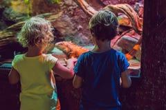 Μικρό παιδί και κορίτσι που προσέχουν τα τροπικά ψάρια κοραλλιών στη μεγάλη δεξαμενή ζωής θάλασσας Παιδιά στο ενυδρείο ζωολογικών στοκ εικόνα