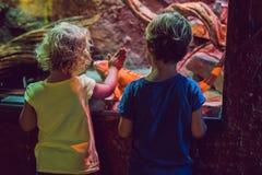 Μικρό παιδί και κορίτσι που προσέχουν τα τροπικά ψάρια κοραλλιών στο μεγάλο λι θάλασσας Στοκ εικόνες με δικαίωμα ελεύθερης χρήσης