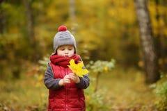 Μικρό παιδί κατά τη διάρκεια του περίπατου στο δάσος στην ηλιόλουστη ημέρα φθινοπώρου Στοκ Εικόνες
