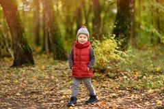 Μικρό παιδί κατά τη διάρκεια του περίπατου στο δάσος στην ηλιόλουστη ημέρα φθινοπώρου Στοκ φωτογραφίες με δικαίωμα ελεύθερης χρήσης