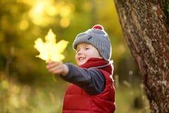 Μικρό παιδί κατά τη διάρκεια του περίπατου στο δάσος στην ηλιόλουστη ημέρα φθινοπώρου Στοκ εικόνα με δικαίωμα ελεύθερης χρήσης
