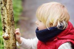 Μικρό παιδί που κοιτάζει στο μεγάλο σαλιγκάρι κατά τη διάρκεια του πεζοπορώ στο δάσος Στοκ φωτογραφία με δικαίωμα ελεύθερης χρήσης