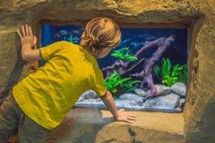 Μικρό παιδί, παιδί που προσέχει το κοπάδι των ψαριών που κολυμπούν στο oceanarium, παιδιά που απολαμβάνει την υποβρύχια ζωή στο ε στοκ εικόνα με δικαίωμα ελεύθερης χρήσης