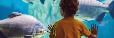 Μικρό παιδί, παιδί που προσέχει το κοπάδι των ψαριών που κολυμπούν στο oceanarium, παιδιά που απολαμβάνει την υποβρύχια ζωή στο Ε στοκ φωτογραφία