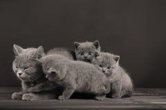 Μικρό παιχνίδι γατών γατακιών και μητέρων, που απομονώνεται Στοκ φωτογραφία με δικαίωμα ελεύθερης χρήσης