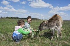 Μικρό παιδί και κορίτσι θερινής έξυπνα ηλιόλουστα ημέρας που ταΐζουν λίγο μόσχο Στοκ Εικόνες