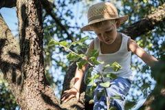 Μικρό παιδί με το καπέλο αχύρου που αναρριχείται σε ένα δέντρο Στοκ Εικόνα