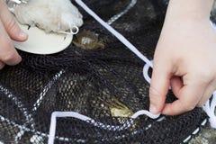 Μικρό παιδί που αλιεύει και που πιάνει τα καβούρια να τους επιλέξει επάνω στοκ φωτογραφίες