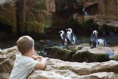 Μικρό παιδί που εξετάζει τα penguins Στοκ Εικόνες