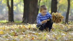 Μικρό παιδί που συλλέγει τα φύλλα στα ξύλα απόθεμα βίντεο